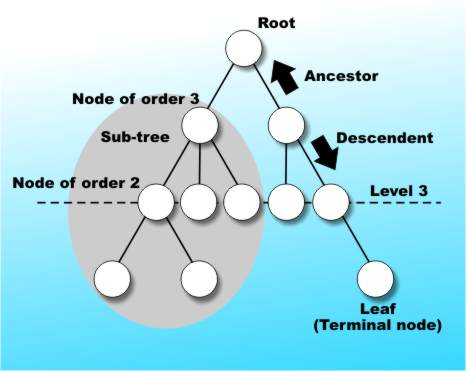 an overview algorithms and data structures computer science essay 5 relation of computer science and mathematical algorithms 6 algorithm media data structures and algorithm essays on topic algorithms.