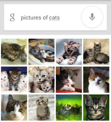 googlecatpics